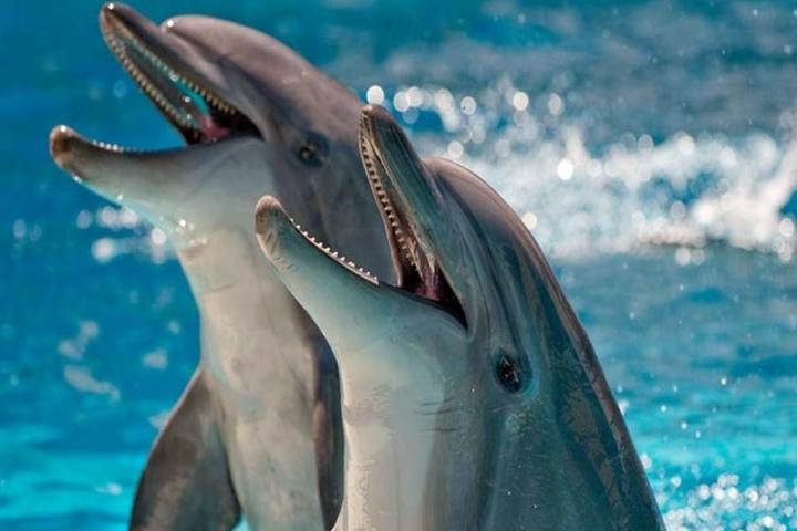 delfiny_630bd_XL