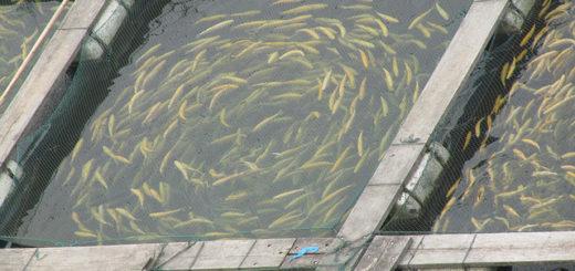 fish_farm