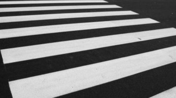 zebra-800x445