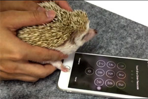 419583e-jizhak-iphone
