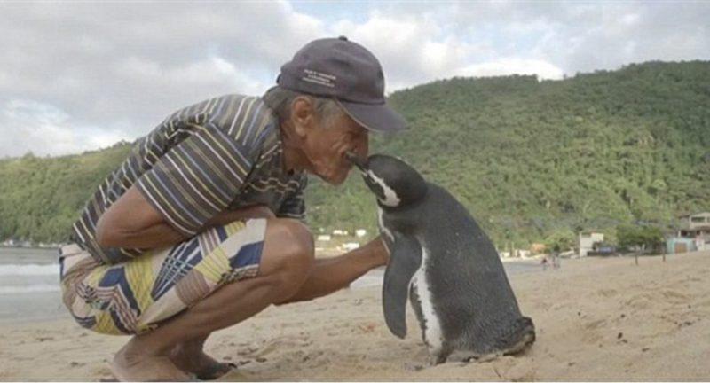 pingvin-1024x553