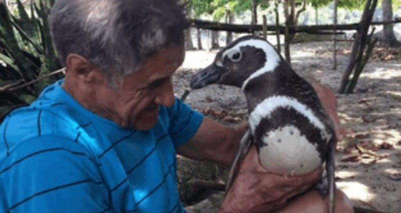 pingvin-5-1024x544